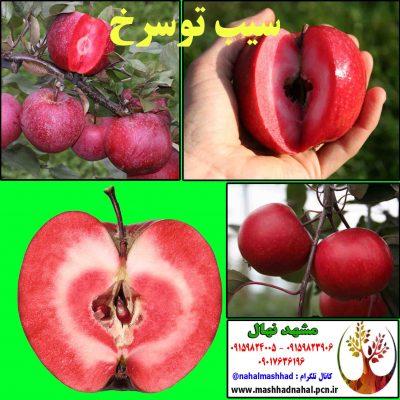 سیب خونی